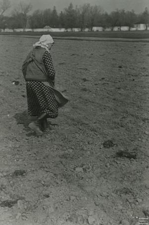 Dębowa Góra, 1941. Fot. ze zbiorów Henryka Komorowskiego/AHM, prawa zastrzeżone
